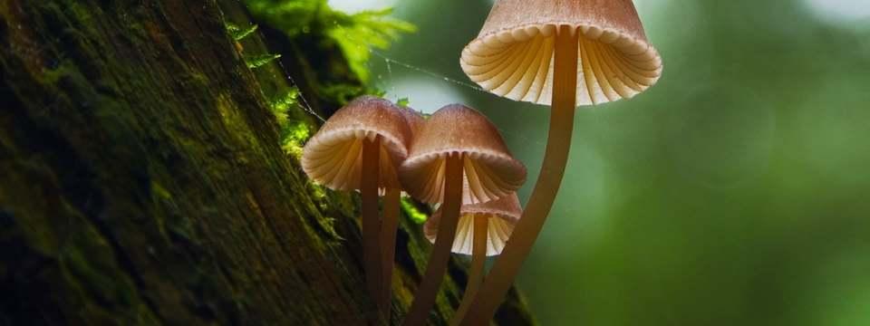 Fantastische Pilze - Die magische Welt zu unseren Füßen